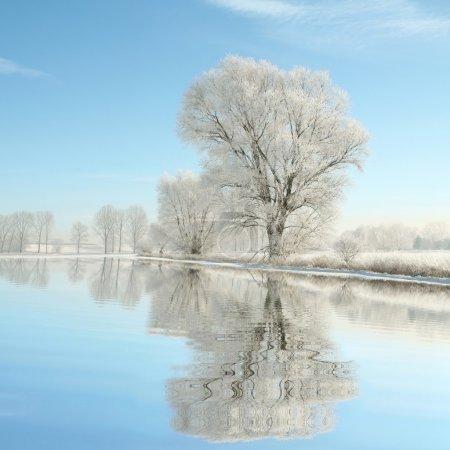 景观的早晨霜花树