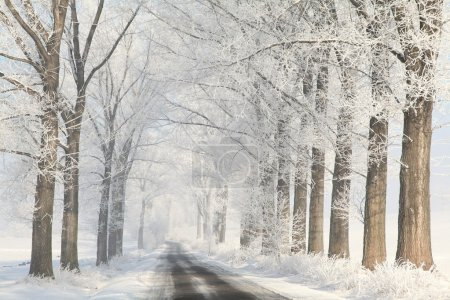 Winter country road among frosted trees